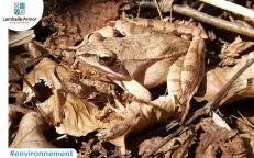 Protection des amphibiens > Recensement