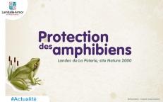 Protection des amphibiens