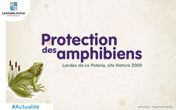 Protection des amphibiens